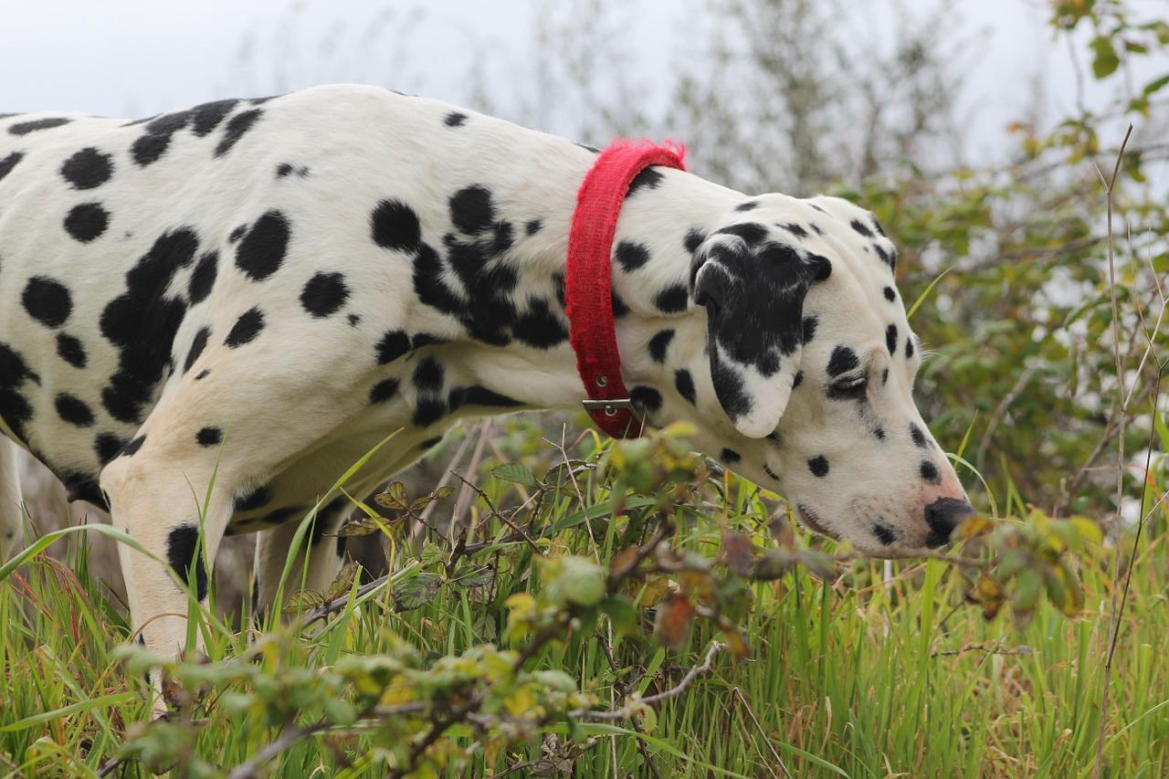 запах изо рта у собак