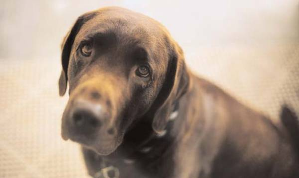 Что делать если у собаки сильно урчит в животе