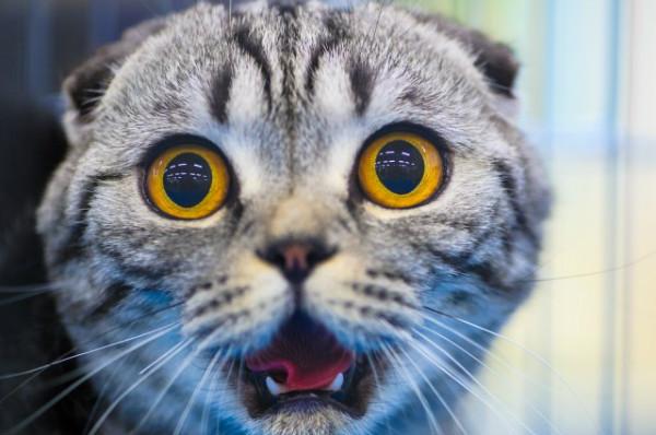 Почему кошки боятся огурцов: научный взгляд на хиты YouTube