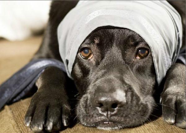 Травматин инструкция по применению для собак