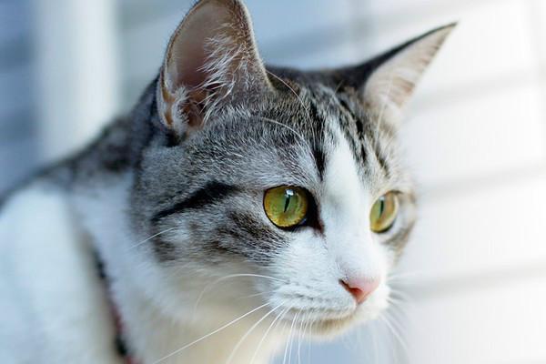 Обезболивающие средства коту
