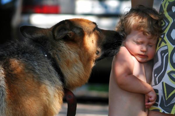 Ребенок боится собак: разбираем все возможные причины