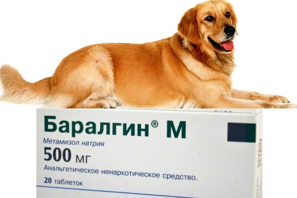 Баралгин для собак: описание препарата и его применение