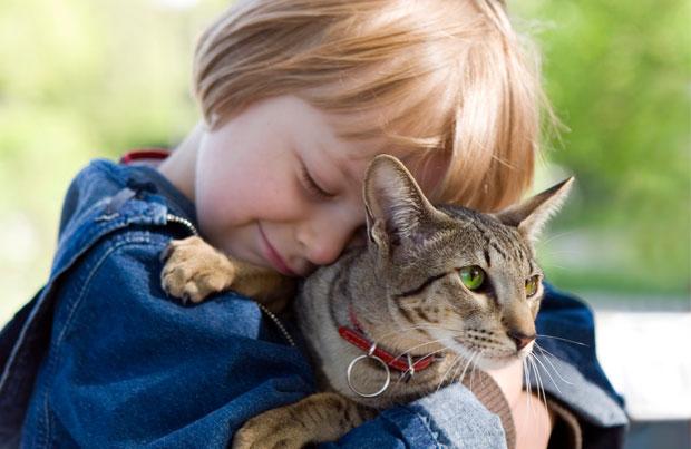 """Лучшие породы кошек для детей по версии сайта """"Ваши питомцы"""""""