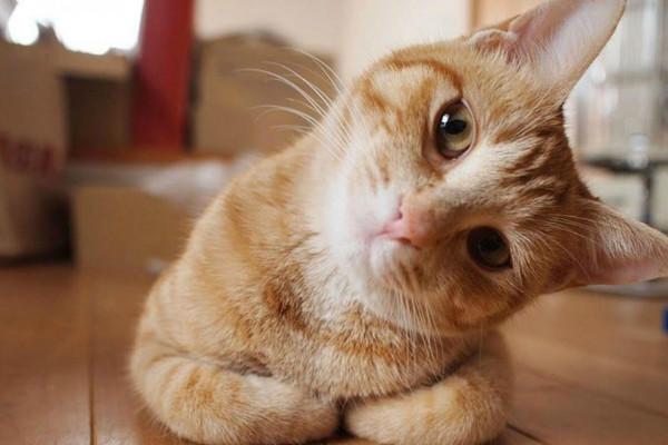 У кота нарушена нервная система