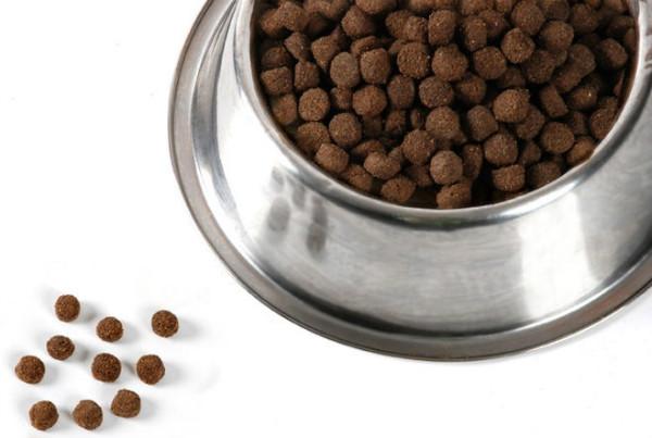 Чем кормить пекинеса в домашних условиях