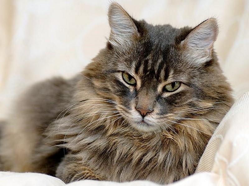 Рибоксин коту дозировка
