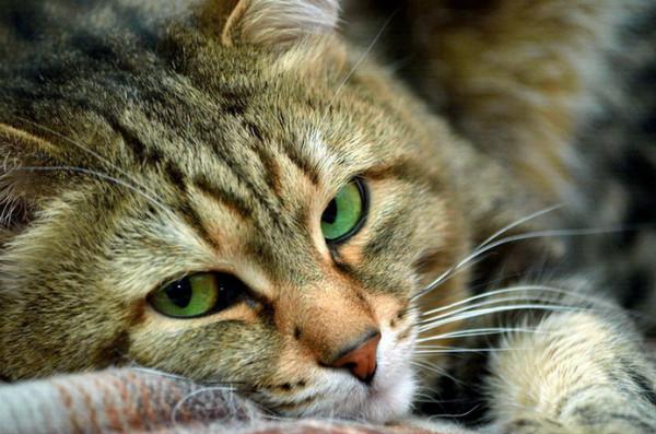 Эндометрит у собак симптомы диагностика и лечение