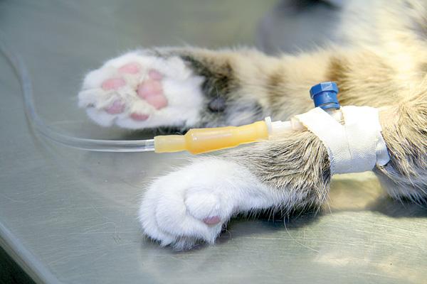 Лечение почечной недостаточности у кошек лечение в