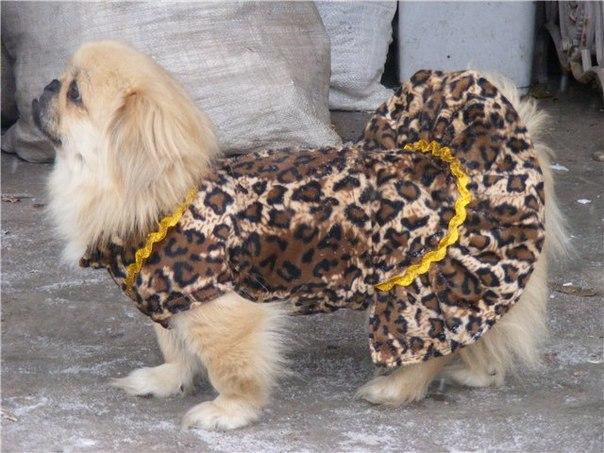 Одежда Для Пекинеса