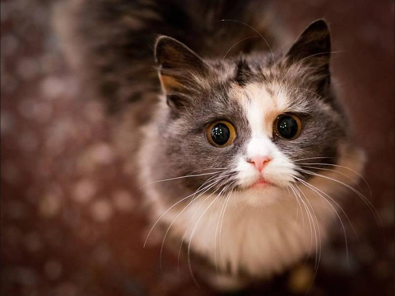 Если кот рвёт розовым