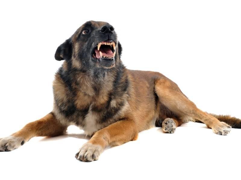 Собака рыгает желтой пеной