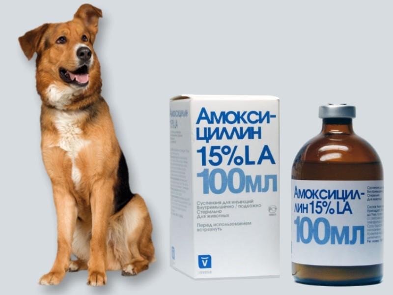 аллергия на амоксициллин фото