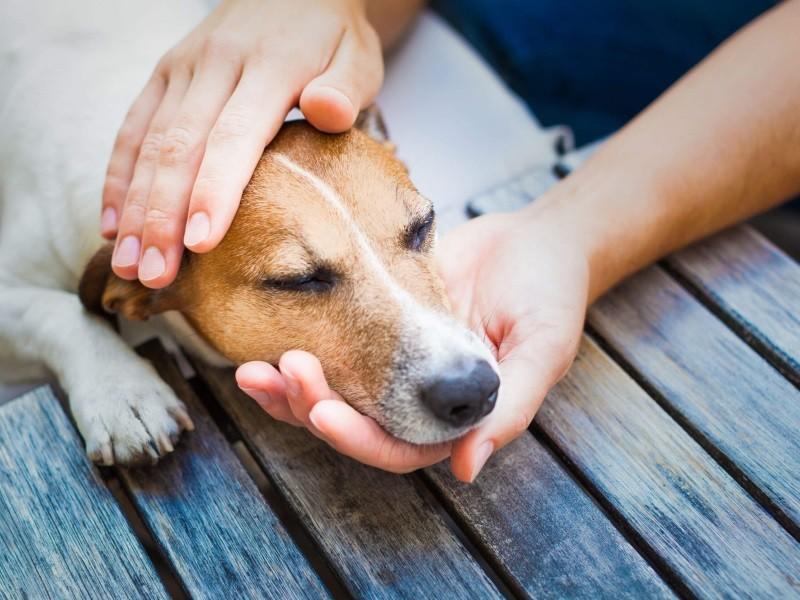 Сильный кашель у собаки