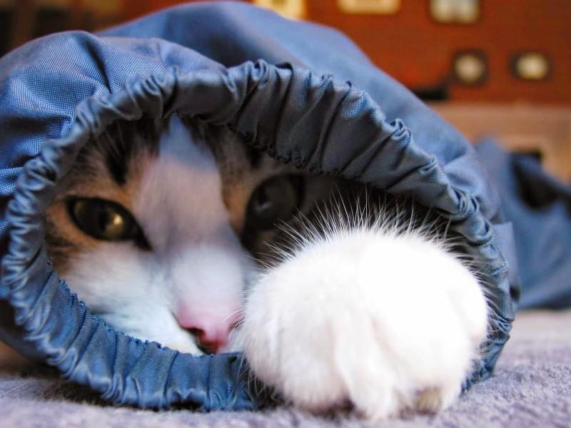 Можно ли дать коту обезболивающее