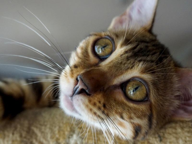 Болезни у котов от которых они могут умереть