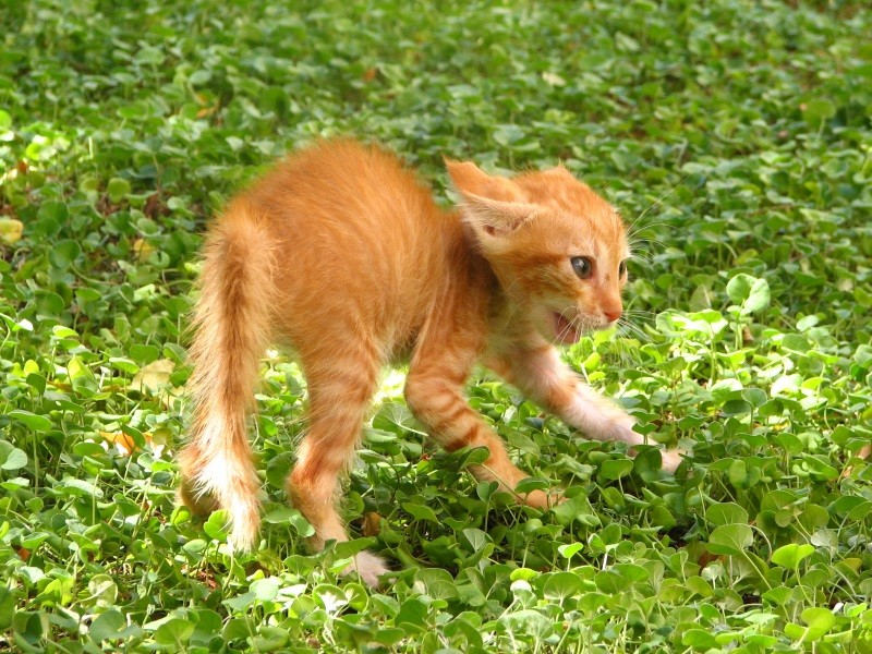 Что делать если котенок кусается и царапается