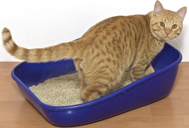 Как вывести песок из мочевого пузыря у кота