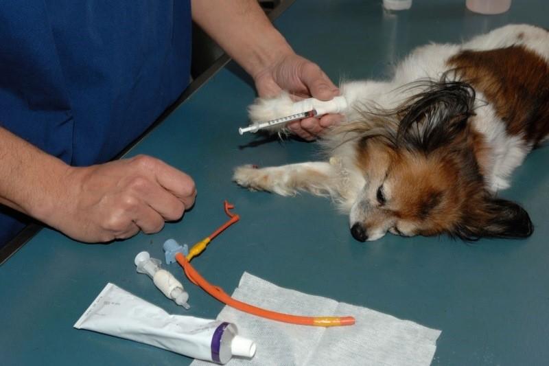 Лечение каналов зуба показания