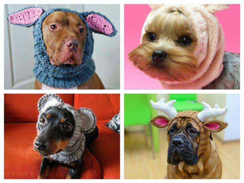 Вязаные шапки своими руками для собак