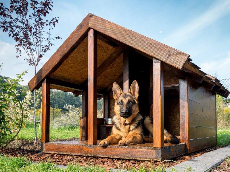 Как сделать собачью будку для овчарки