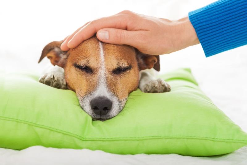Микроинсульт у собаки: причины, симптомы, лечение