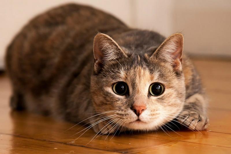 Почему коты дома не живут