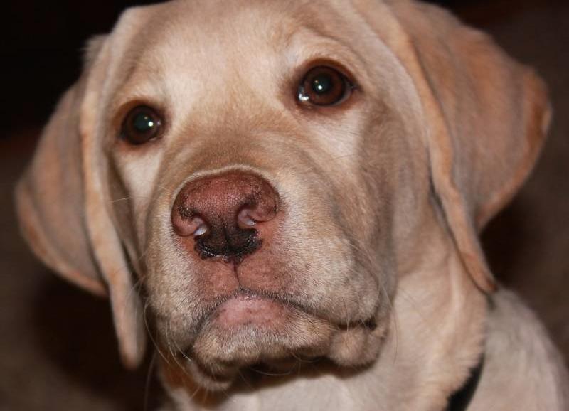 почему у собаки неприятный запах изо рта