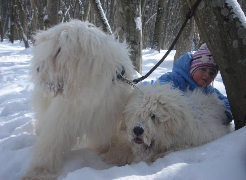 Что делать при укусе собаки и чем опасен укус