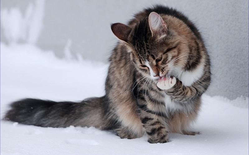 Тело у кота холодное