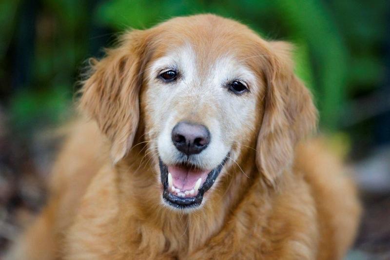 Маточное кровотечение у собаки: факторы, причины, терапия