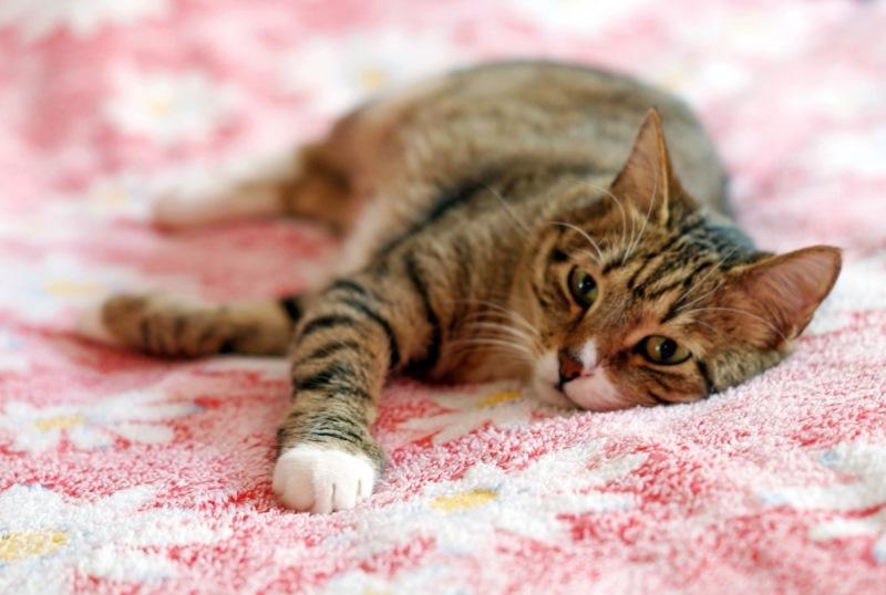 Что такое простатит у котов