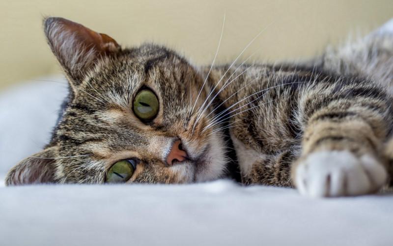 Почему коты поджимают лапы