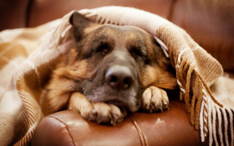 У собаки нет мочеиспускания что делать
