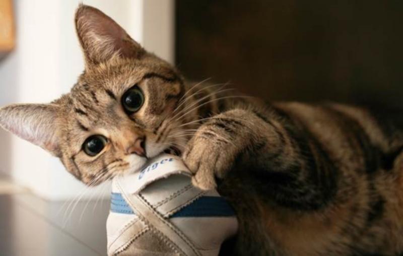 Что делать если кот все грызет