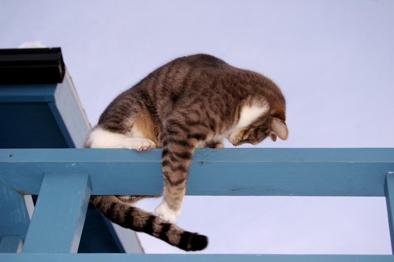 Когда кот бегает за хвостом