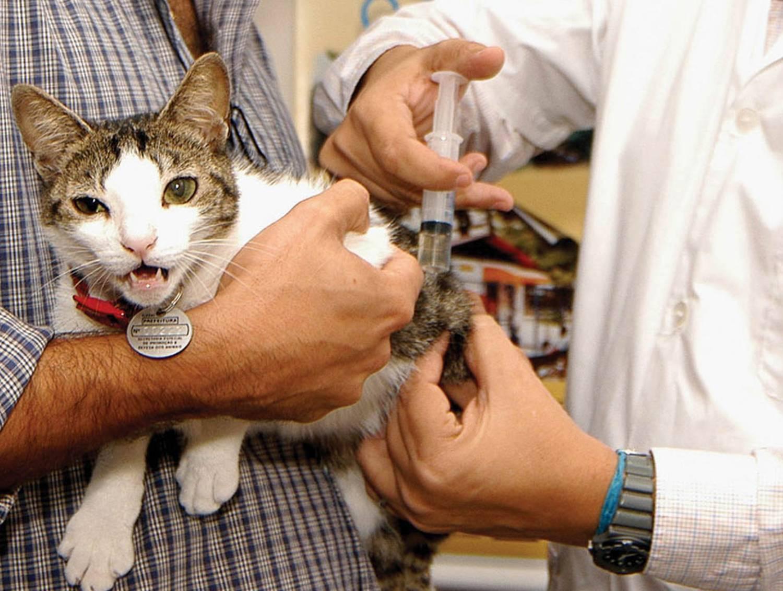 Что дать коту от поноса в домашних условиях: как 80