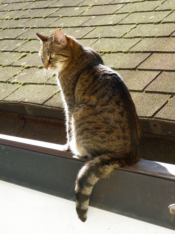 Звуки мартовские коты