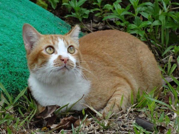 Предполагают, что кошка в момент совокупления испытывает боль