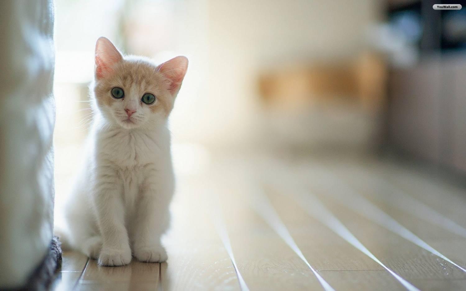 Что означает когда кот лапами топчется