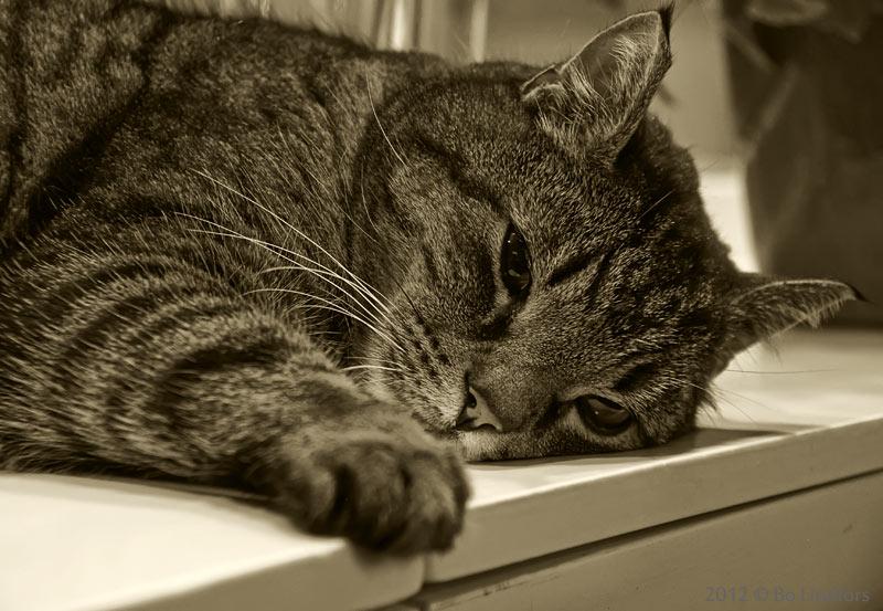 Гепатит у котов симптомы