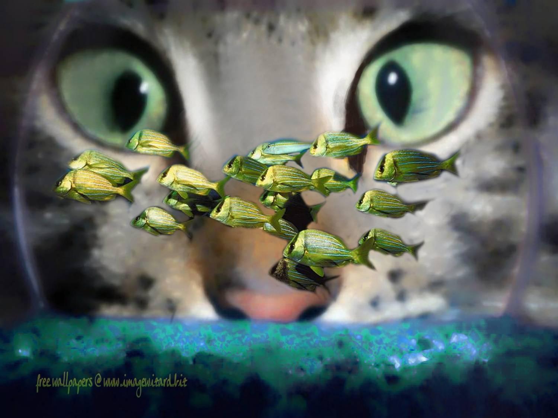почему у кошки плохой запах изо рта