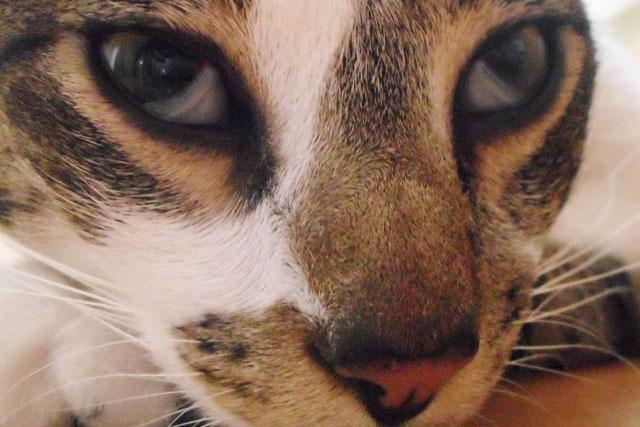 Почему у кота глаза прищуренные