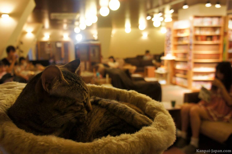 Коты кафе спб