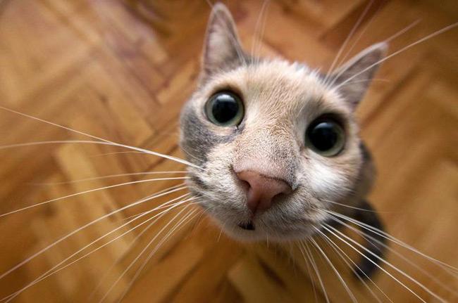 Смешные кошки - 4