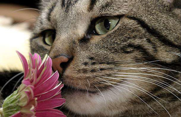 Кто такие мартовские коты?
