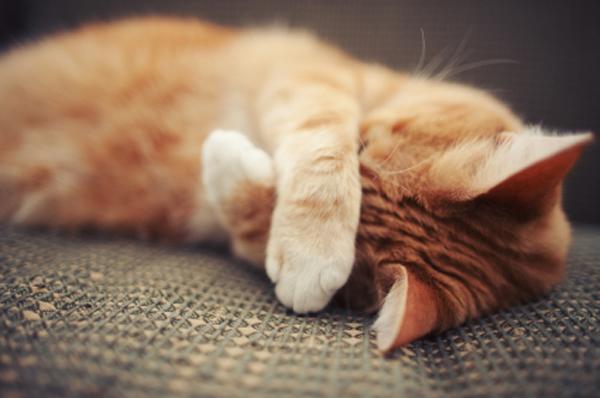 Чем перебить запах от котов в