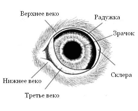 лечение глаз от паразитов народное средство