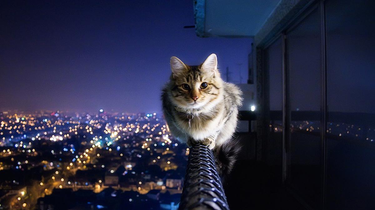 Кот днем спит ночью орет