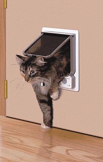 Отверстие в двери для кота